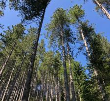 boschi-pian-dei-termini-225x300